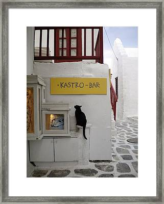 A Curious Cat In Mykonos Framed Print