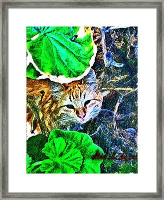 A Curious Cat Framed Print