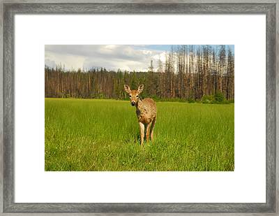 A Curious Friend Framed Print by Larry Moloney