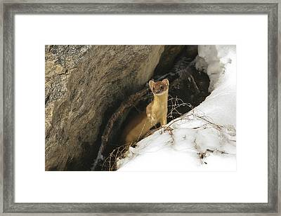 Framed Print featuring the photograph A Curious Glance by Gary Hall