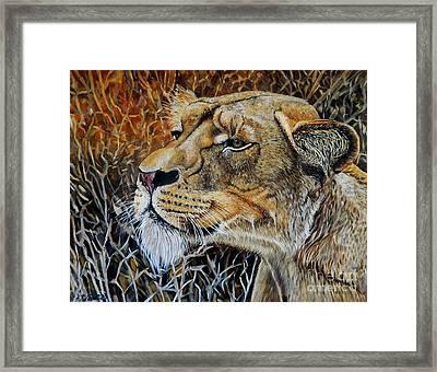 A Curious Lioness Framed Print