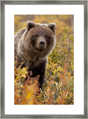 A Curious Look Framed Print by Tim Grams