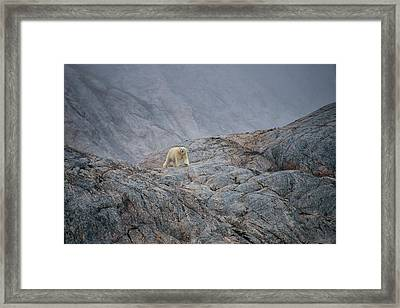 A Curious Polar Bear Approaching A Boat Framed Print