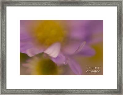 A Curl Of A Petal Framed Print by Niki Van Velden