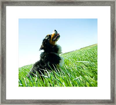 A Cute Dog On The Field Framed Print by Michal Bednarek