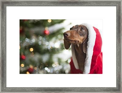 A Dachshund Christmas Framed Print by Rischa Heape