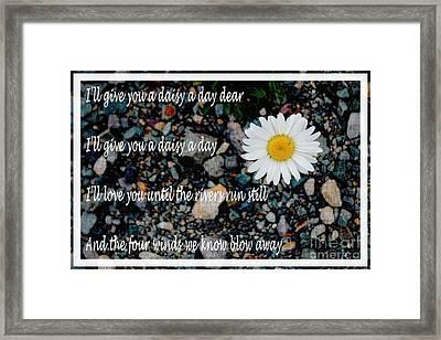 A Daisy A Day Framed Print