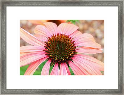 Framed Print featuring the photograph A Daisy For You by Elizabeth Budd
