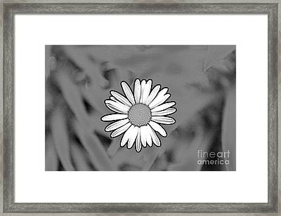 A Daisy  Framed Print by Jay Nodianos