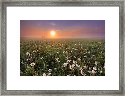 A Dandelion Kind Of Morning Framed Print