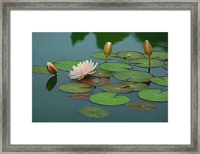 A Day At The Lily Pond Framed Print