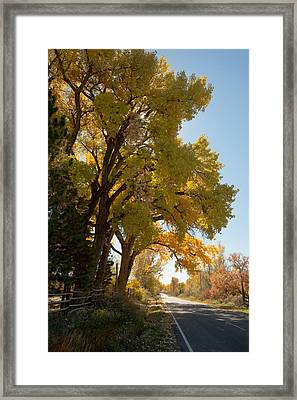 A Day For A Daydream Framed Print by Allen Lefever