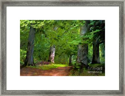 A Day In The Forest Framed Print by Lutz Baar