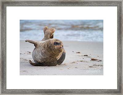 Framed Print featuring the photograph a day in the Sun by Ruth Jolly
