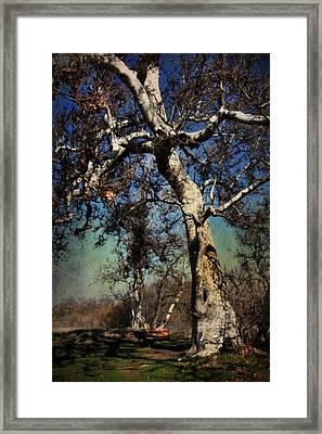 A Day Like This Framed Print by Laurie Search