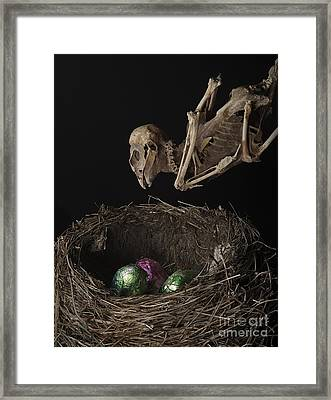 A Dead Bird Flies Into Its Nest Only To Find Chocolate Eggs Framed Print