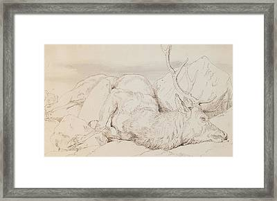 A Dead Stag Framed Print by Sir Edwin Landseer