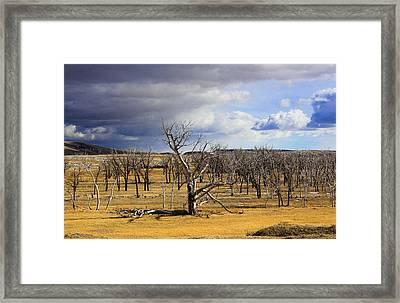 A Dead Tree Among Many Framed Print