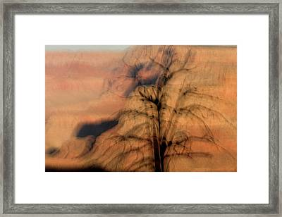 A Dead Tree On The Rim Of The Canyon Framed Print