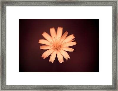 A Delicate Flame Framed Print