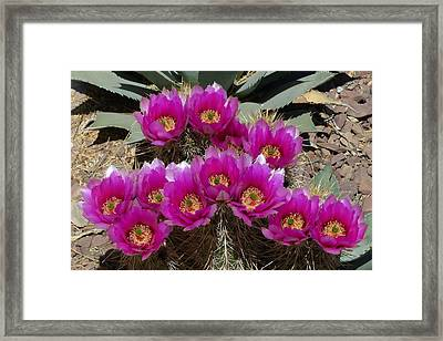 Framed Print featuring the photograph A Delightful Dozen by Cindy McDaniel