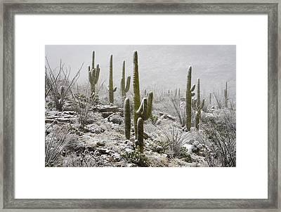 A Desert Blizzard  Framed Print by Saija  Lehtonen