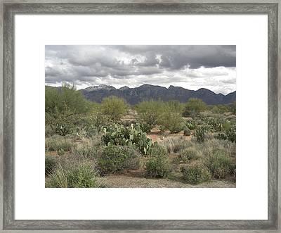 A Desert Day Framed Print by John Wilson