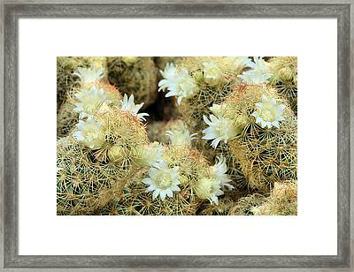 A Desert Floral Framed Print by JC Findley