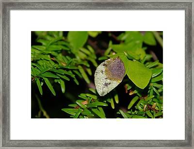 A Dew Covered Leaf Framed Print by Jeff Swan