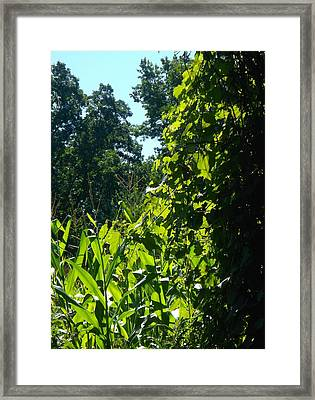A Different Farm Scene Framed Print by Sylvia Herrington