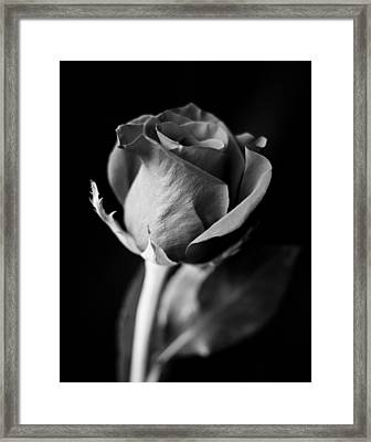 A Different Kind Of Love Framed Print by Christi Kraft