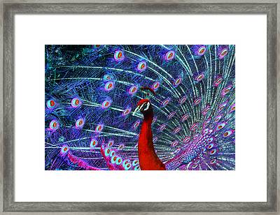 A Different Kind Of Peacock Framed Print