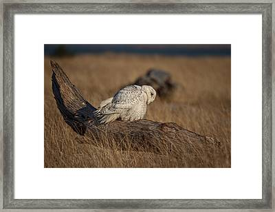 A Different Point Of View D5567 Framed Print by Wes and Dotty Weber