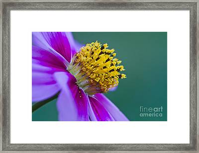 A Different Point Of View Framed Print by Mitch Shindelbower