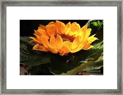 A Different Side Framed Print by Lexi Sale