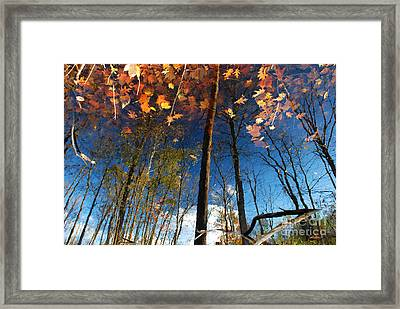 A Different Side Of Autumn Framed Print