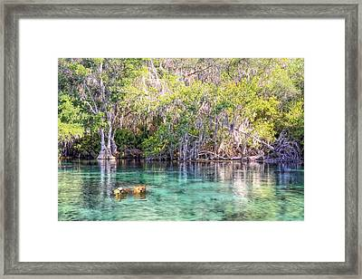 A Dip In The Rainbow Framed Print by Bob Jackson