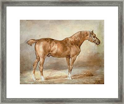 A Docked Chestnut Horse Framed Print by Theodore Gericault