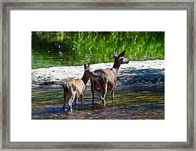 A Doe And Fawn Framed Print