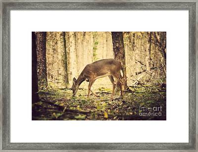 A Doe In The Forest Framed Print by Lena Auxier