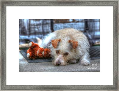 A Dog And His Best Friend Framed Print