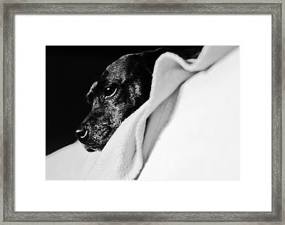 A Dogs Life Framed Print