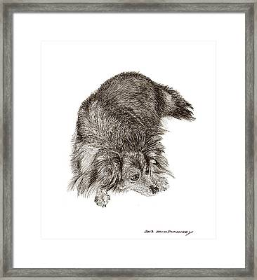 A Dog Named Zorra Framed Print