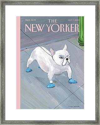 A Dog Wears Shoes On The City Sidewalk Framed Print