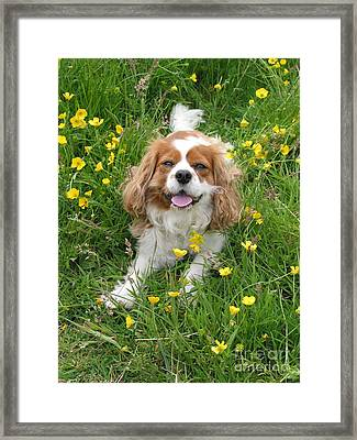 A Dog's Buttercup Heaven Framed Print by Jo Collins
