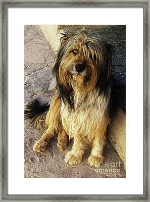 A Dog's Fate Framed Print by Xueling Zou