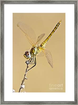 A Dragon Flies Framed Print by Heiko Koehrer-Wagner