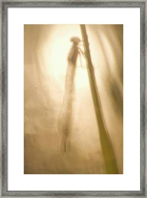 A Dragonfly In Early Morning Framed Print