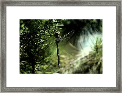 A Dragonfly In The Shade Framed Print by Jeff Swan