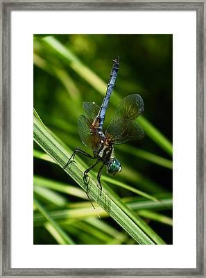 A Dragonfly Framed Print by Raymond Salani III